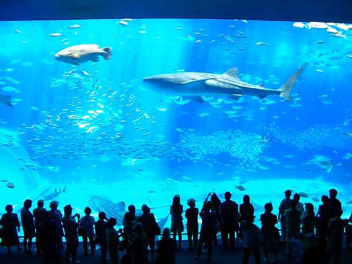 Aquarium-okinawa
