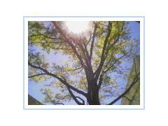 eden alley sunlit tree (fragilebreath) Tags: treeonfire