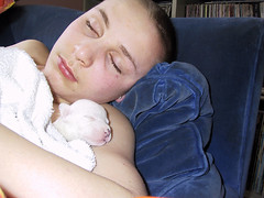 6 day old orphan (heyou) Tags: pitbull elise dogs