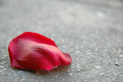 Steel Dust: Fallen Petal (LarimdaME) Tags: nyc subway petal macro flower lost red platform bayparkway ntrain
