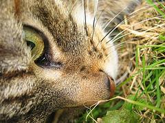 cat (estherase) Tags: eye cat nose findleastinteresting fave canonixus400 emssimp