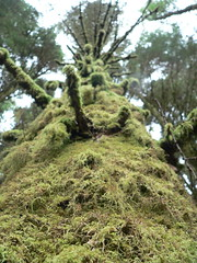 Moss On A Tree In A Forest