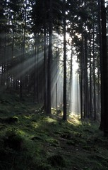 Bundle of sunrays (Linda6769) Tags: wood light shadow sun tree forest germany moss ray thuringia sonne schatten sonnenstrahlen conifer nadelbaum konifere explored