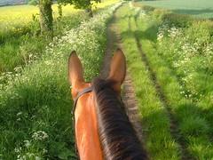 Bridle Path (Lexie's Mum) Tags: riding hacking englishcountryside fields rape evening summer sun