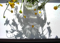 buttercup (mohawk) Tags: flowers light shadow copyright sun art love window water glass look yellow liverpool dead photography see photo petals sill photographer arte buttercup d kunst s sean stamen refraction surprise mohawk pollen 2009 08 wirral magie veiw magia     limbert mgica magisch