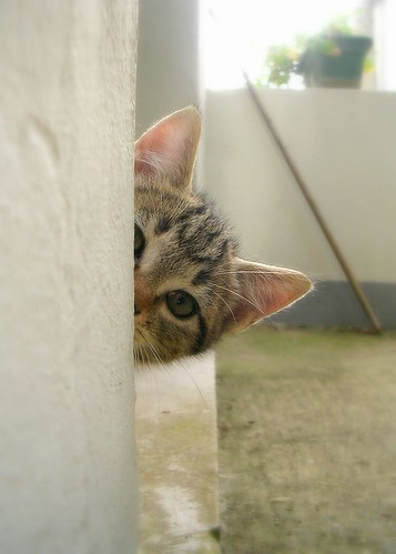 peeking kitten
