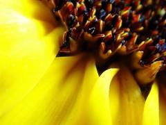 MayFlowers2005 (21) (lisaa lisa) Tags: mayflowers