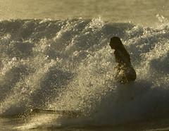161207_img_5063c (Ola Lola) Tags: puertorico ocean surf surfing surfer wave water wilderness sport horizontal