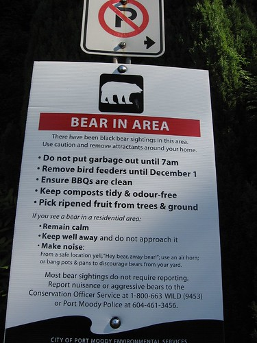 Bear in Area