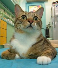 EPSN8251_1 (jacky elin) Tags: cats brown cat mix tabby jacky