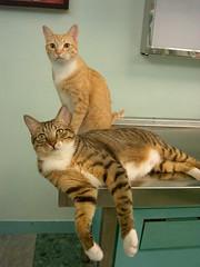 EPSN8269 (jacky elin) Tags: orange cats brown cat mix tabby lin jacky