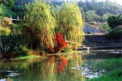 a pond at the Maofeng Mountain (shenxy) Tags: china mountain tree water landscape guangdong