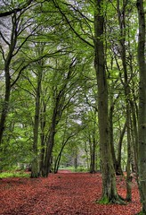 Forest Scene - No Gump (Magdalen Green Photography) Tags: trees light tree green forest ilovenature scotland silent floor scottish copper