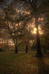 Dream (jason_minahan) Tags: autumn fall clouds newjersey nj princeton hdr mercercounty xti