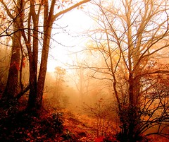 Autumn Color In Morning Mist
