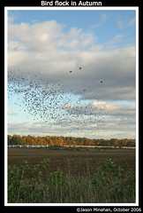 Bird Flock in Autumn (jason_minahan) Tags: new autumn bird fall farm flock nj princeton jersey hdr mercercounty
