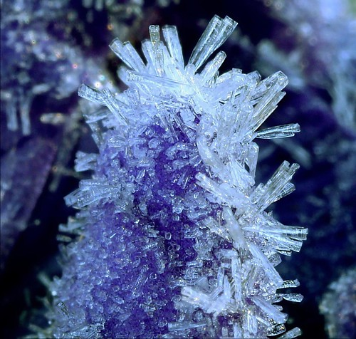 Frost on aconite petals