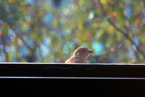 Center Bird