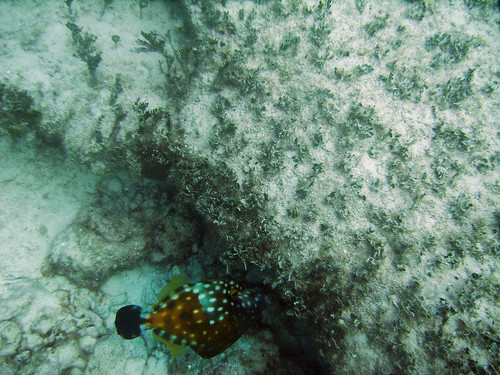 20060809_Rainbow_Reef_Afternoon_076_R1