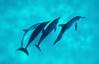 Liquid Space (fotolen) Tags: love nature nikonstunninggallery spotteddolphins fiveflickrfavs