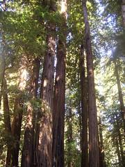 Muir Woods (lisa_nels) Tags: bestnaturetnc06