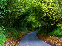 Hobbit Road? (algo) Tags: road england green topv2222 photography interestingness topf50 bravo searchthebest quality topv1111 chilterns topv999 interestingness1 topf300 explore topv5555 utata hobbits topv9999 topv11111 topf150 algo hobbit topv3333 tring topf100 topf250 topf200 tolkien middleearth topf400 abw topf500 1000f firstquality topf700 topf600 topv22222 topf1000 splendiferous magicdonkey topv5000 topf900 explore1 gtaggroup goddaym1 abigfave topv25000 generouscomments 61115 stillgreeninshelteredplaces 600faves 700faves colourartaward theflickrcollection