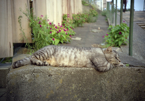 ぐうたら猫
