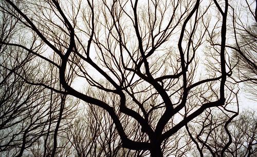 falltree06025.jpg