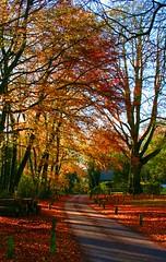 IMG_2054 (Stevie-B) Tags: road autumn tree leaves delete10 delete9 delete5 delete2 delete6 delete7 save3 delete8 delete3 save7 delete delete4 save save2 save4 save5 save6