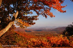 Chestnut Cove  In Autumn (Awesome Photography) Tags: autumn mountains oneofakind scenic northcarolina explore blueridgemountains blueridgeparkway globalvillage fallwinter appalachianmountains appalachians peopleschoice naturesfinest wonderworld blueribbonwinner greatcapture autumnfall flickrsbest nikonstunninggallery mywinner abigfave flickrgold worldbest shieldofexcellence flickrfavoritephotographers chestnutcove impressedbeauty awesomephotography allrightsreserved diamondclassphotographer flickrdiamond globalvillage2 awesometribe ysplix excellentphotographerawards beautifulcapturegroup photosexplore colorphotoawardbronze colorphotoawardpremiere
