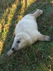 No water (fuzzypurple) Tags: seals donnanook