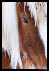 Friendly face. (li.) Tags: travel winter light red horse white cold ice nature beautiful face animal animals angel canon wonderful ilovenature real photo iceland nice fantastic day different shot shots magic great seasonal picture fave angels excellent faves capture snfellsjkull sland phototrip snfellsnes outstanding li hellissandi ilo extraordinarily instantfave outstandingshots eyland mywinners abigfave abigfav photofans p1f1 anawesomeshot impressedbeauty aplusphoto lamyndir
