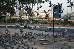 Connaught Place (avinashbhat) Tags: birds pigeons newdelhi connaughtplace