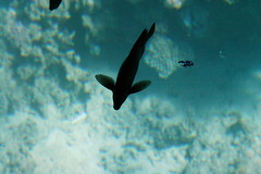 20061109 - Egypt, Sharm el Sheikh - glass bottomed boat, coral reef_IMG_1325 (Sally Payne) Tags: egypt sharmelsheikh hires originals coralreef glassbottomboat naamabay