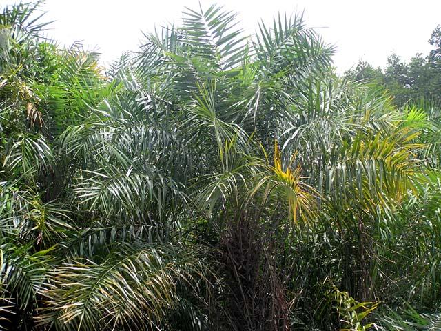 10 loại cây củng cố phong thủy trong nhà
