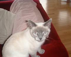 Small's Crazy Eyes (tashwayne) Tags: 2001 cats cat small alabama