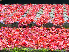 Fallen red leaves over roof tiles - by aurelio.asiain