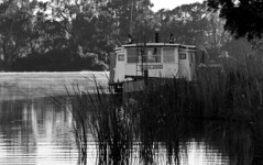 Tania Anne (Trace Connolly) Tags: australia australian australiasouthaustralia blackandwhite blackandwhitephotography happy taniaanne canon canon7d monochromephotography murrayriver midmurray bowhill river rivermurray mist water art light white black sun summer trees landscape bw exposure flickr paddlewheeler j k l m n o p