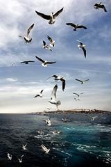 One thing... (orgutcayli) Tags: sea sky cloud birds ferry turkey fly interestingness seagull istanbul explore journey retouch deniz vapur bosphorus marmara martı bogaz yolculuk orgutcayli türkiye örgütçaylı gökyüzü