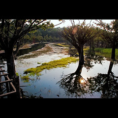 Amaznia ( Tatiana Cardeal) Tags: brazil water brasil digital river hope documentary tatianacardeal par brsil amazonia amazonie amaznia enviroment documentaire sustainabledevelopment flona igarap documentario  jamaraqu florestanacionaldotapajs tapajsnationalforest projetosadeealegria healthandhappinessproject desenvolvimentosustentvel saudeealegria