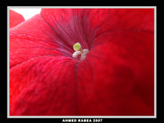 Spring On The Doors (Ahmed Rabea) Tags: red flower macro bahrain