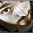 Buddy icon Tenebre Viola