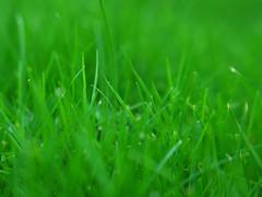 Is the grass greener with sludge fertilizer?