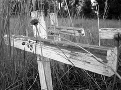 Crosses 4 (Duke of Pornia) Tags: wood bw crosses 3way 3wayassignment21