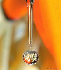 Fish Bowl (Fir..) Tags: orange fish colour macro topf25 water wow frozen bravo waterdrop nemo quality bowl drop clownfish droplet hanging tap mostviewed froze familyfriendly abigfave flickrplatinum