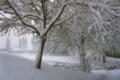 Snowscape (sjnewton) Tags: trees winter white snow nature birmingham nikon university em blizzard 1990 filmscan sellyoak nikonem tamron2880
