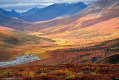 North Klondike Valley - Yukon Autumn (Marc Shandro) Tags: autumn light red mountain canada mountains fall nature beautiful yellow wonderful river landscape scenery paradise superb tombstone north scenic peak scene arctic yukon valley geology wilderness sunlit enlightenment majestic untouched idyllic luminous autumnal breathtaking dempster tundra klondike illuminate distant pristine unspoiled expanse subarctic enchanting magnificence cotcmostinteresting grandness interestingness54 i500 diamondclassphotographer yukonvalley visipix