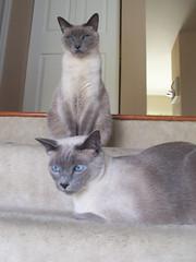 Jack and Lola