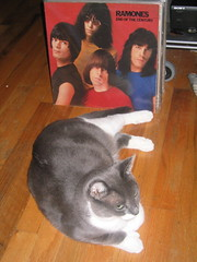 Syd Joins the Ramones (Squid Ink) Tags: cats newyork brooklyn queens ramones gothamist polydactyl