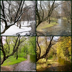 Four seasons (see also better version - link below) (green_lover) Tags: park autumn trees winter tree river spring fdsflickrtoys colours seasons hometown firsttheearth